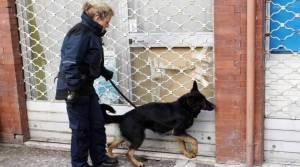 Cani anti-droga 2